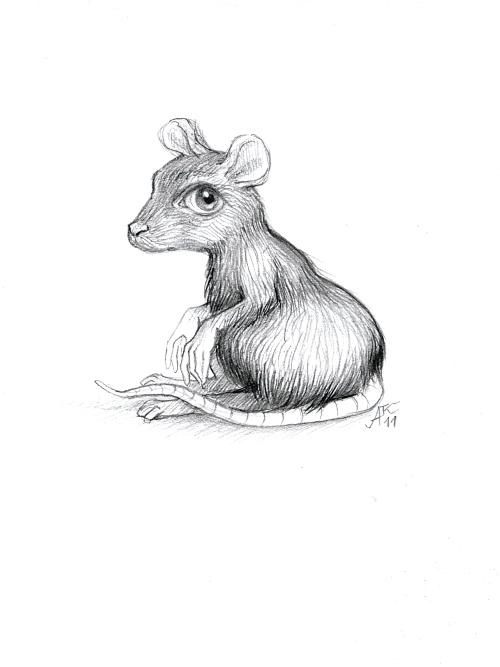 O myších a lidech