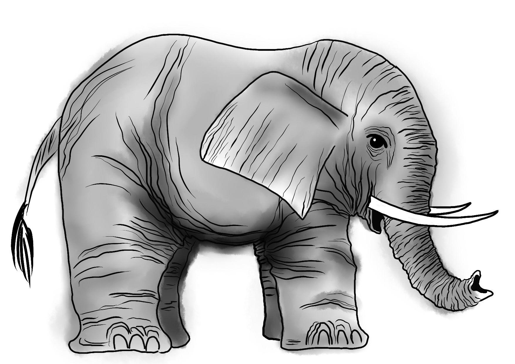 Sloní vrásky