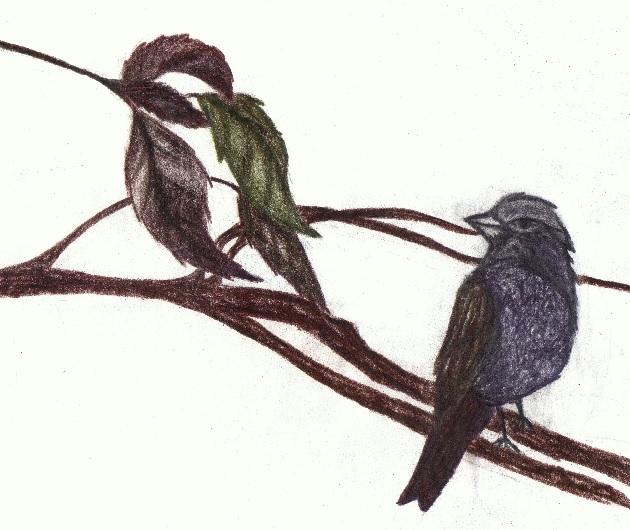 Ptáci (Paja)