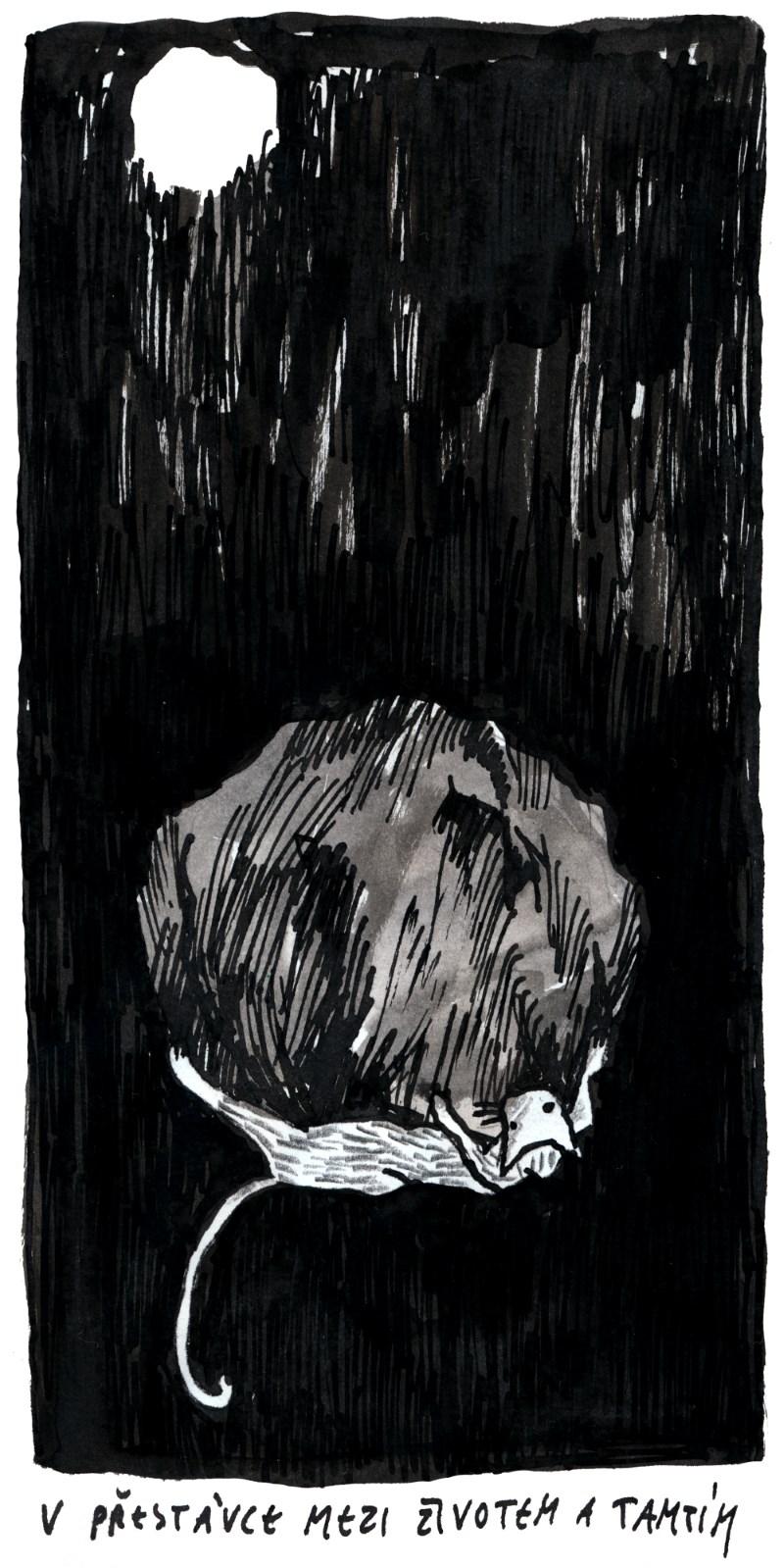 Kocourek (Kari)