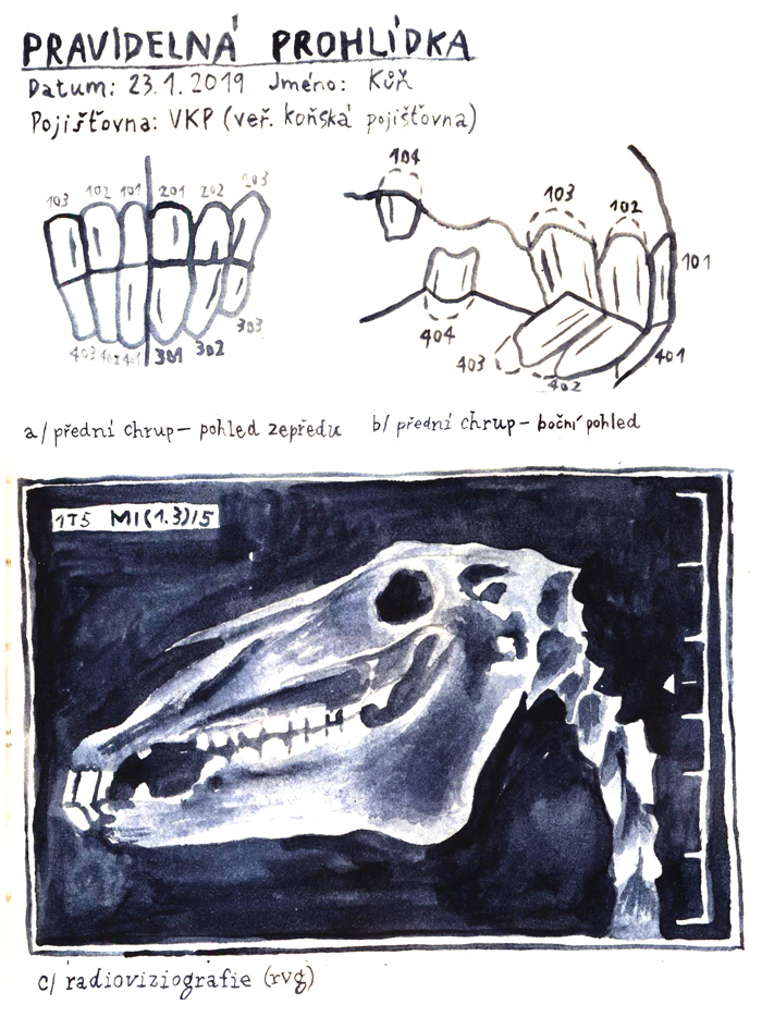 U zubaře (Kari)